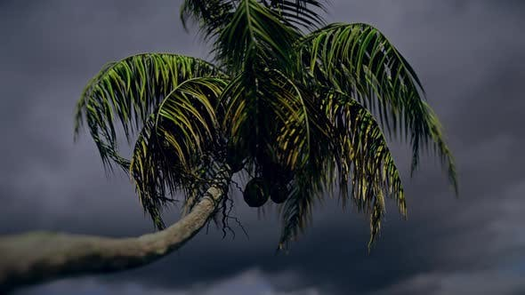 Thumbnail for Palm Tree In Storm