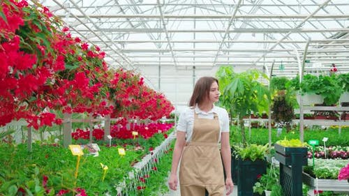 Female Gardener Controlling Quality of Flowers at Greenhouse