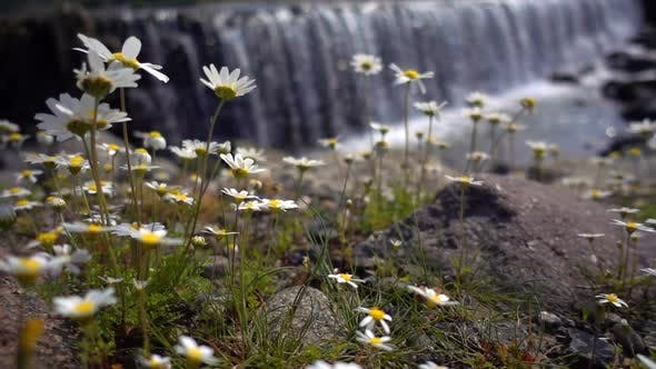 Thumbnail for Daisy Flower And Waterfall Behind 1