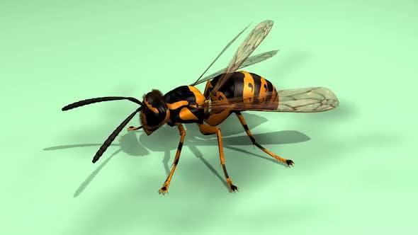 Thumbnail for Bee Honeybee Apis