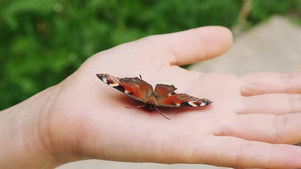 Butterfly Sitting on the Women Hands