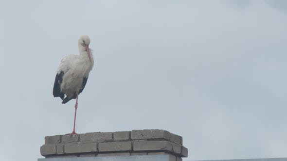 Crane Family on the Roof