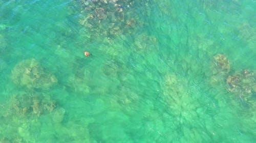 Aerial View Of Hawaiian Green Sea Turtle In Turquoise Water Ocean Reef