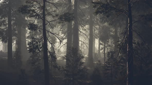 Thumbnail for Black Tree Trunk in a Dark Pine Tree Forest