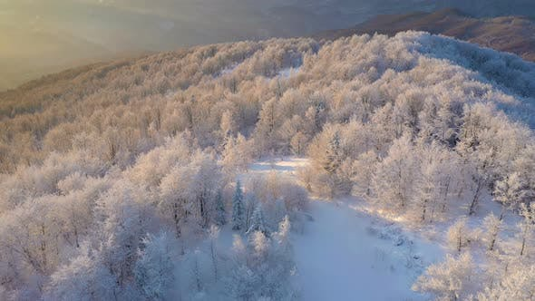 Winter Sunrise Above The Mountain Forest