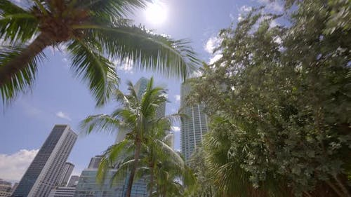 Miami Footage Buildings Through The Palm Trees