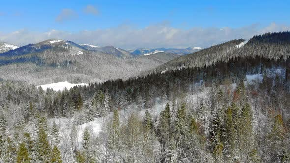 Thumbnail for Panorama of the Mountain Range with Trees Covered with Snow in Sunny Weather