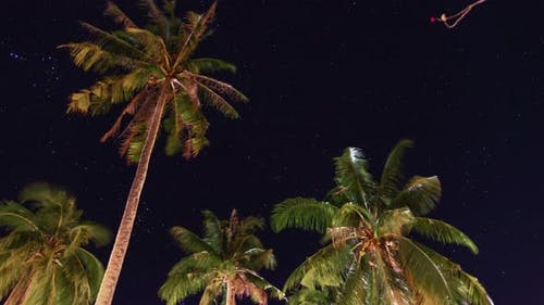 A time-lapse view of palm trees and starry sky
