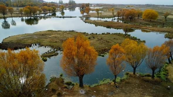 Autumn Reeds On Lake