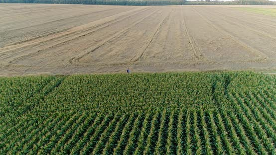 Cover Image for Agriculture Aerial Shot of Corn Field