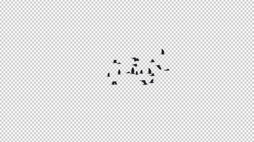 22 schwarze Vögel - Fliegende Transition III