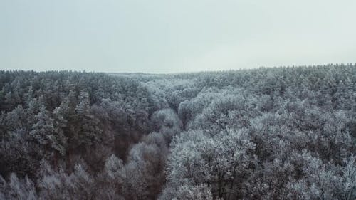 Snowy Forest in Winter