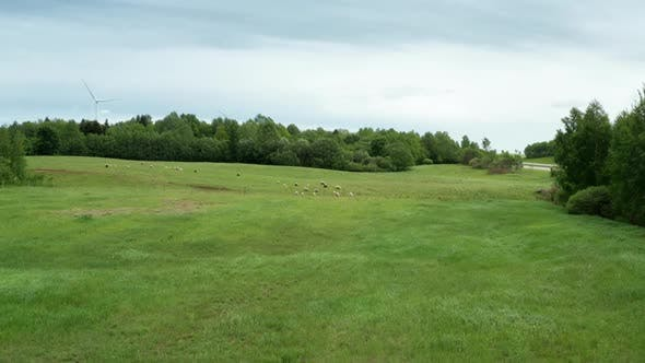 Thumbnail for Drone Shot of Sheep Pasture