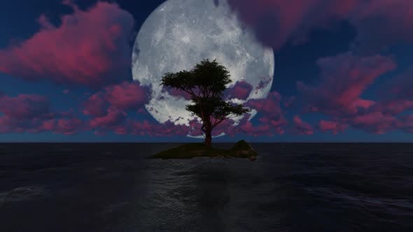 Thumbnail for Trees grow in the middle of the sea at night