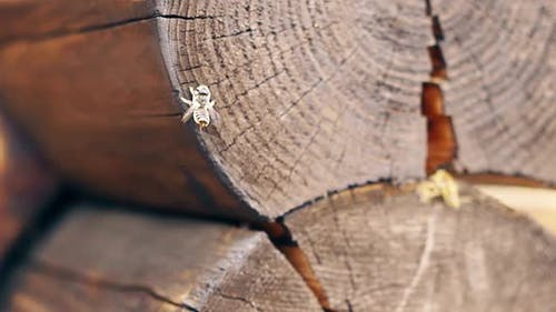 Macro Slow Motion Bees Fly Around the Nest Near the Logs Try To Mate Build a Nest