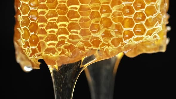 Bee Honeycomb Wax with Honey. Honey Dripping From Honey Comb.