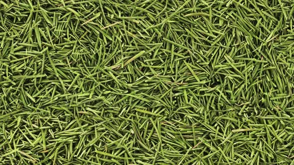 Thumbnail for Seamless Looped Fir Needles Background