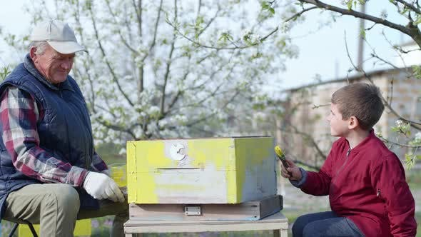 Male Child Helps His Beloved Grandfather Prepare Old Beehives for Bees, an Elderly Man and Boy Paint