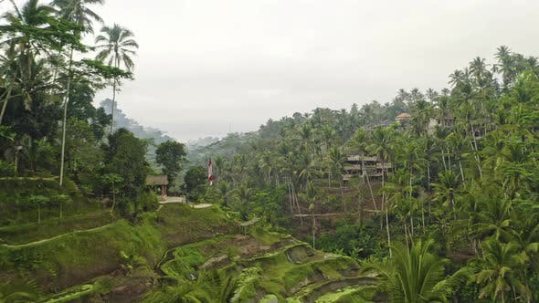 Drone Over Tegalalang Terraced Fields Of Ubud