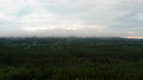 Thumbnail for Fog Covering the Tips of the Pine Trees in a Norwegian Forest
