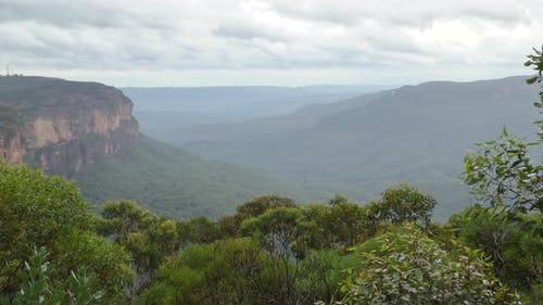 Forest Blue Mountains National Park in New South Wales