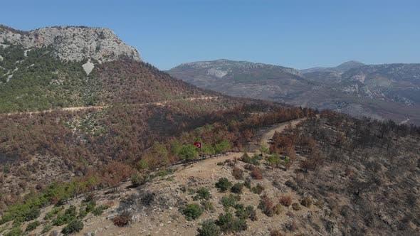 Pine Tree Turkish Flag Mountain Rugged