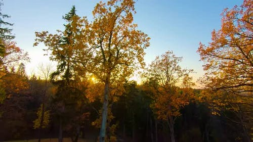 Autumn forest and sun shot from steadicam