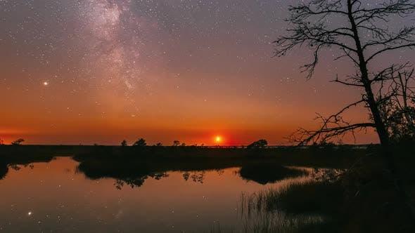 Swamp Nature Landscape