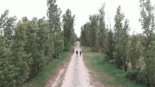 People cycling along gravel road across meadow. Cycling Aerial