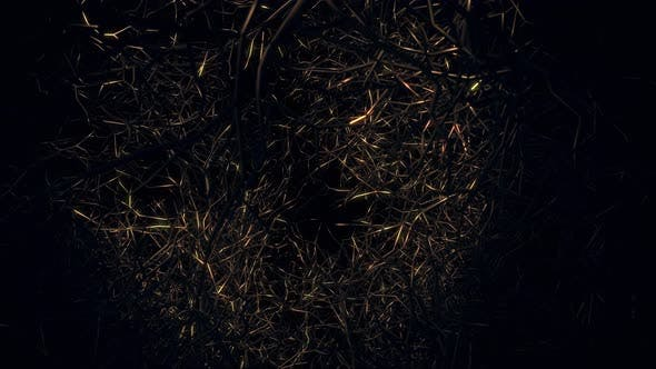 Fliegen im Tod Wälder 03 4K