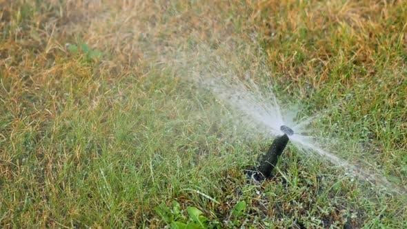 Thumbnail for Garden Sprinkler Irrigates Dry Grass in the Park. Drought Concept