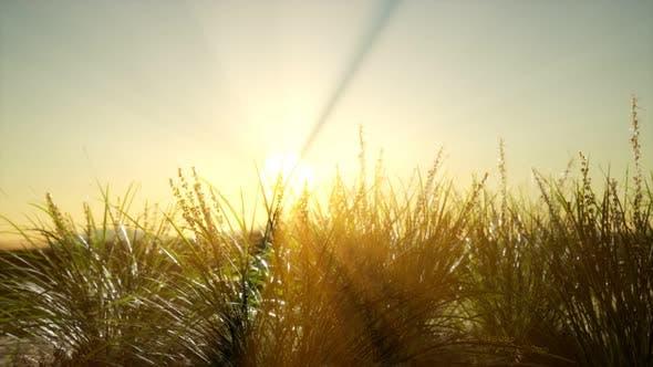 Grünes Gras auf Hügeln bei Sonnenuntergang
