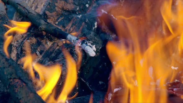 Firewood Burning Closeup Per Day. Bonfire Coal Ignites Sparks. Magic Quality Fire in Nature.