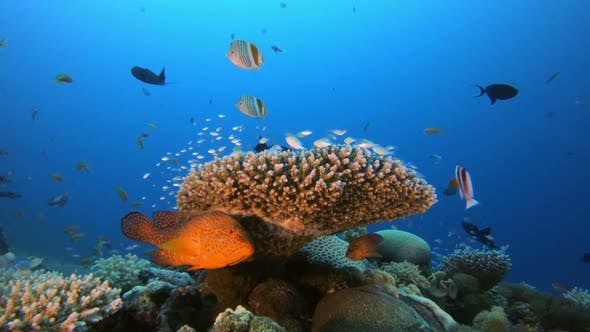 Cover Image for Tropical Colorful Fish