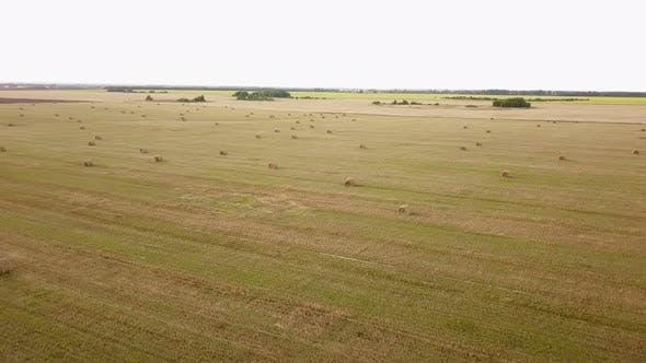 Thumbnail for Farm Field