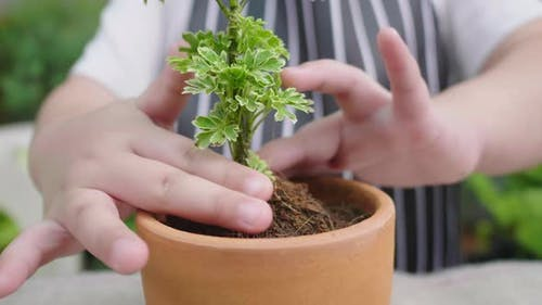 Close up hands decorating a small plants in flowerpot for selling at home
