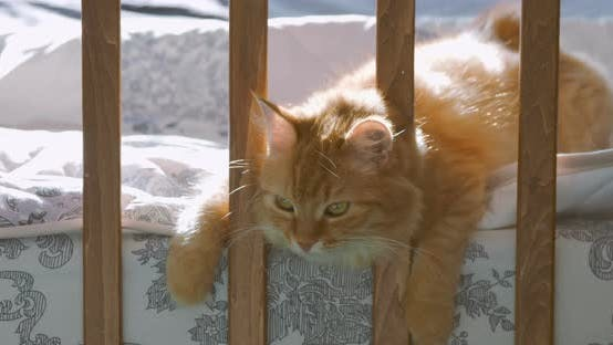 Thumbnail for Cute Ginger Cat Lying in Child Bed. Fluffy Pet Poked Its Head Between Rails of Crib. Cozy Morning at
