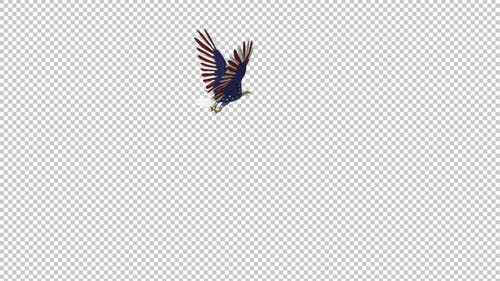 American Eagle - USA Flag - Flying Around Loop - III