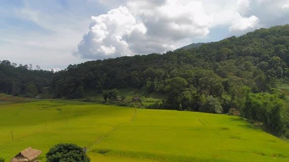 Thumbnail for Summer Landscape in Park