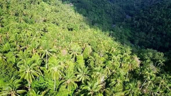 Thumbnail for Flying over Dense Jungle