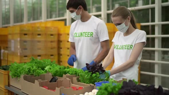 Masked Volunteers Help in Agriculture By Dissolving Spbd Greenery
