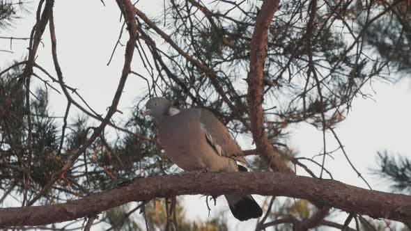Thumbnail for Bird