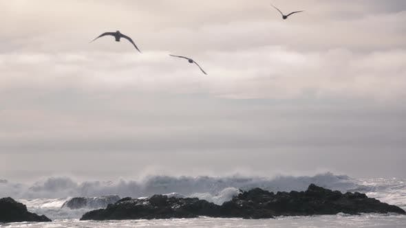 Thumbnail for Birds Flying Over The Ocean
