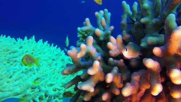 Thumbnail for Underwater Colorful Tropical Reef and Coral Crab