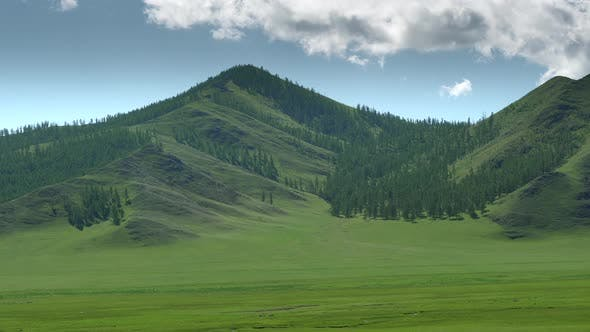 Majestic Sparsely Wooded Forest and Beauty Green Meadow in Unmanned Mountain