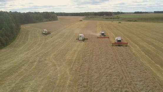 Thumbnail for Upper View Threshers with Grain Platforms Harvest Cereal