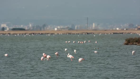 flamingo bird nature wildlife reserve delta ebro lagoon