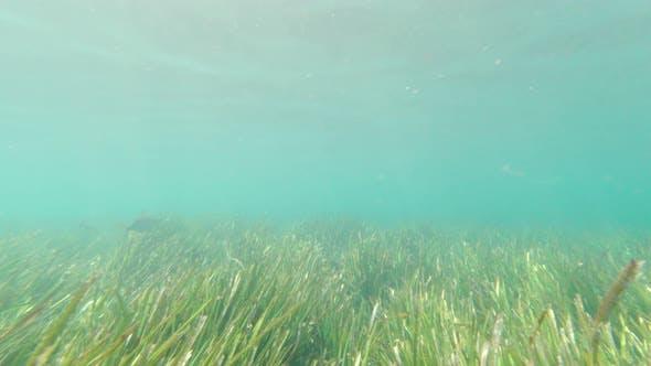 Fish Swims Underwater