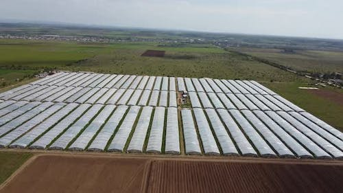 Lots of Farm Greenhouses for Growing Vegetables and Flowers