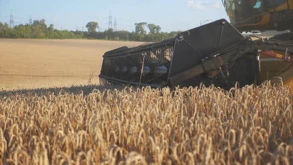 Thumbnail for Close Up Knife of Combine Spinning and Cutting Yellow Ears of Wheat. Harvester Riding Through Field